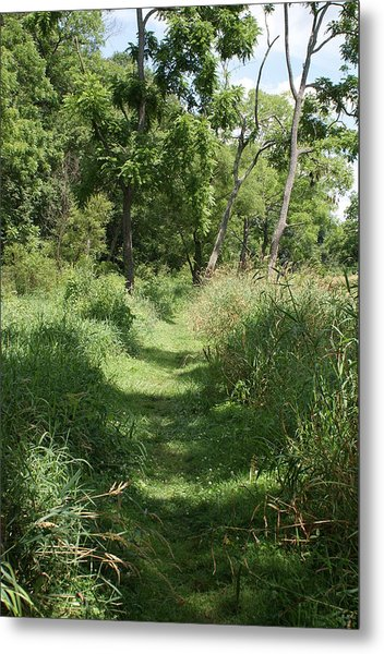 Nature Trail Metal Print by Heather Green