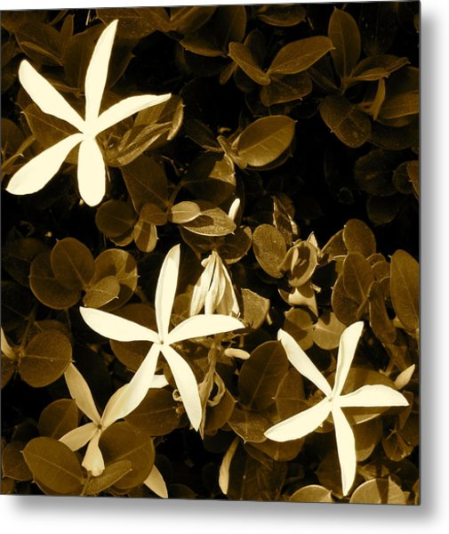 Nature's Stars Metal Print by Ashley Butler