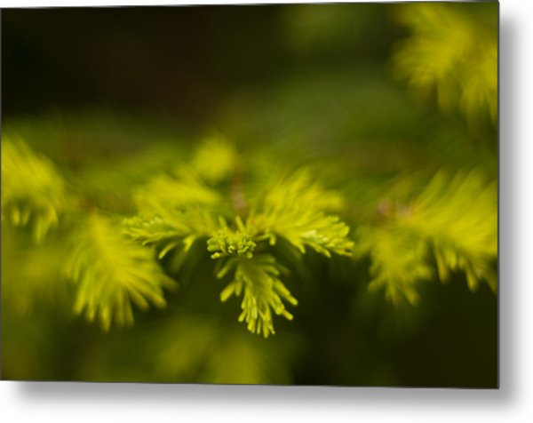New Growth Metal Print by R J Ruppenthal