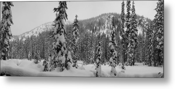 New Snow Metal Print by Mark Camp