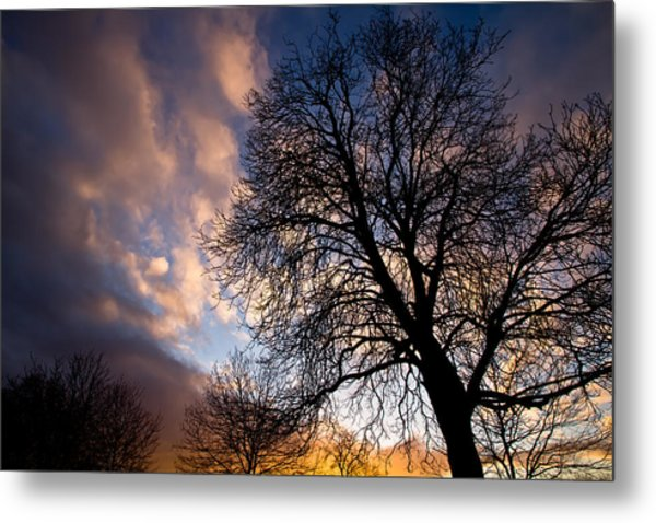 Oak Against The Sky Metal Print