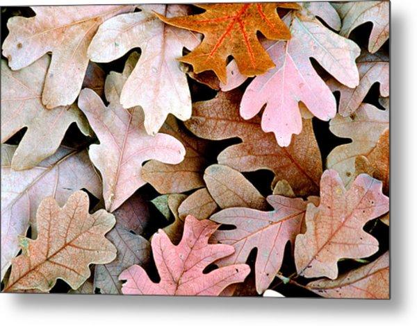 Oak Leaves Photo Metal Print