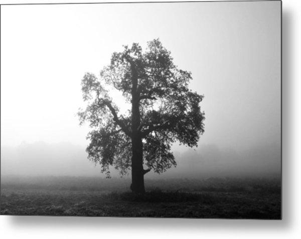 Oak Tree In Fog Monochrome Metal Print