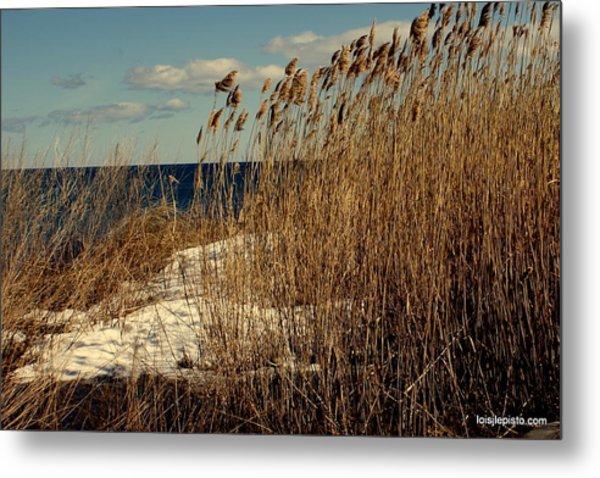 Ocean View Through The Grasses Metal Print by Lois Lepisto