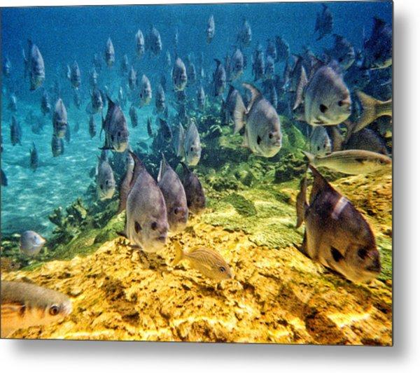 Oceans Below Metal Print