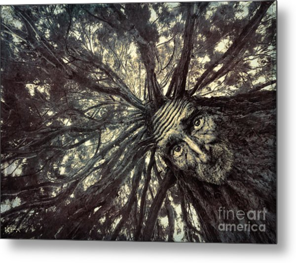 Old Man Tree Metal Print