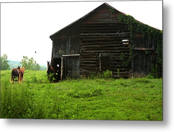 Old Stable And Horses Metal Print