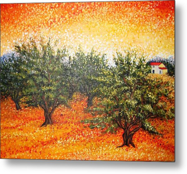 Olive Field In The Sunset Metal Print