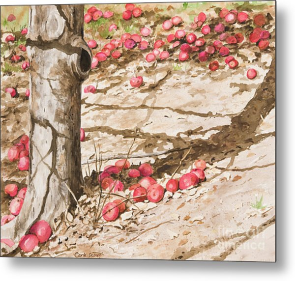 Orchard Afternoon Metal Print by Carla Dabney