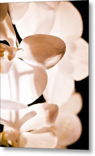 Orchid Metal Print by Nora Batternay