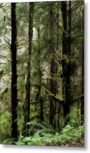 Oregon Old Growth Coastal Forest Metal Print