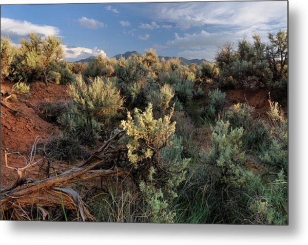 Out On The Mesa 7 Metal Print