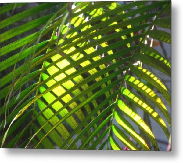 Palm Leaves In Sun Metal Print