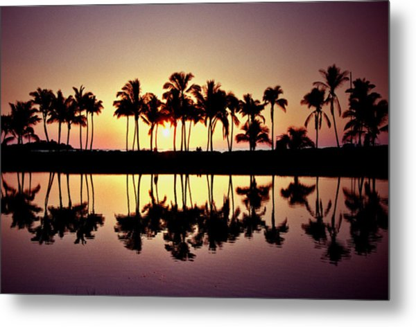 Palms In Silhouette Metal Print by Michael  Cryer