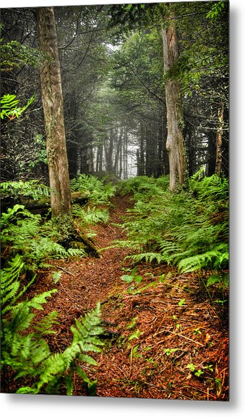 Path In The Ferns Metal Print