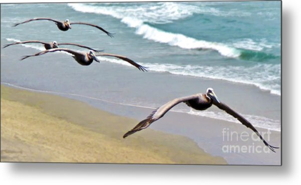 Pelican Fly-by Metal Print