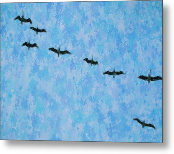 Pelicans' Flight Metal Print