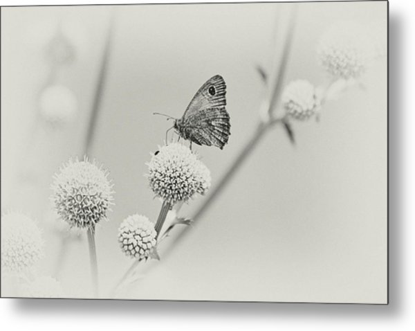 Perched Butterfly No. 255-2 Metal Print