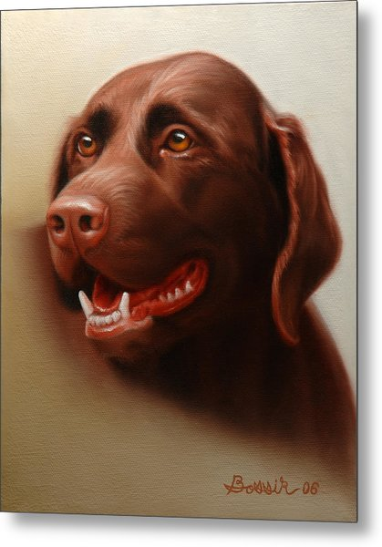 Pet Portrait Of A Chocolate Labrador Metal Print by Eric Bossik