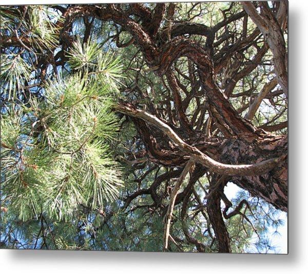Pine-ally Looking Up Metal Print