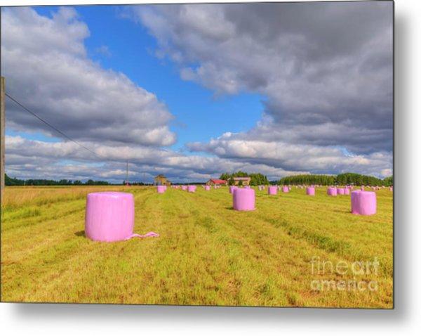 Pink In The Field Metal Print