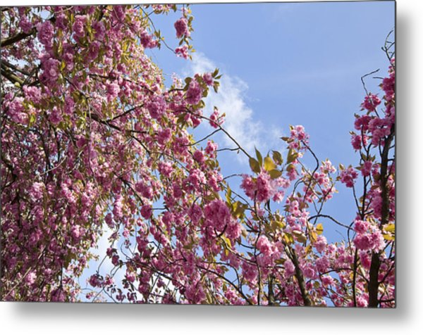 Pink Metal Print by Krista  Corcoran Photography