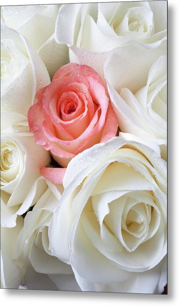 Pink Rose Among White Roses Metal Print
