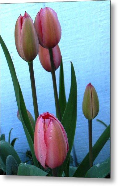 Pink Tulips 2012 Metal Print