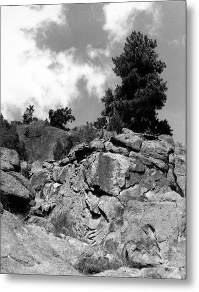 Pinnacle Pine Metal Print