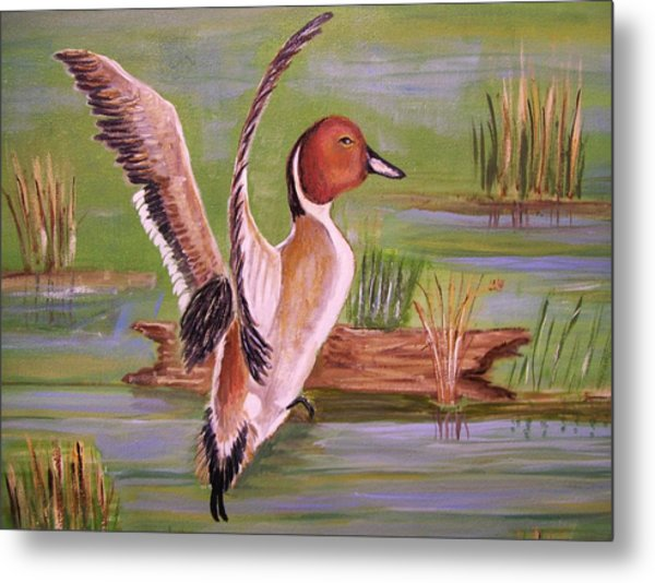 Pintail Duck II Metal Print