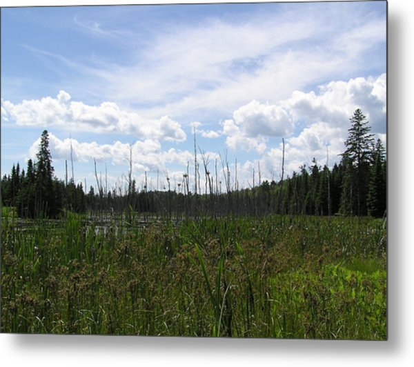 Pond In A Distance Metal Print by Richard Mitchell