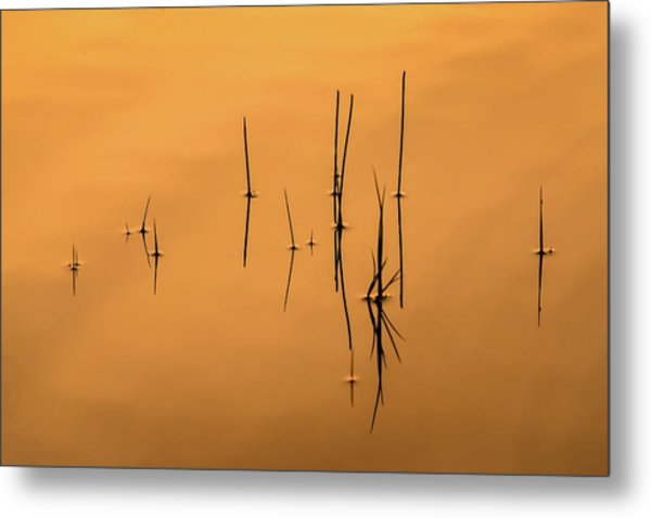 Pond Reeds In Reflected Sunrise Metal Print
