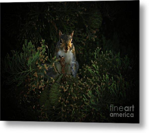 Portrait Of A Squirrel Metal Print