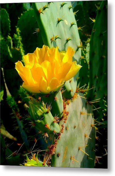 Pretty But Do Not Touch  Metal Print