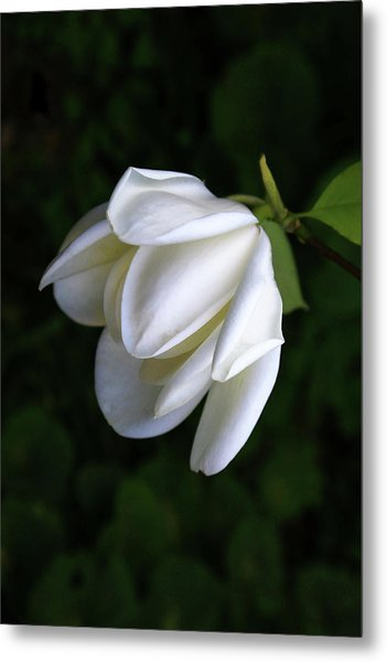 Purity In White Metal Print