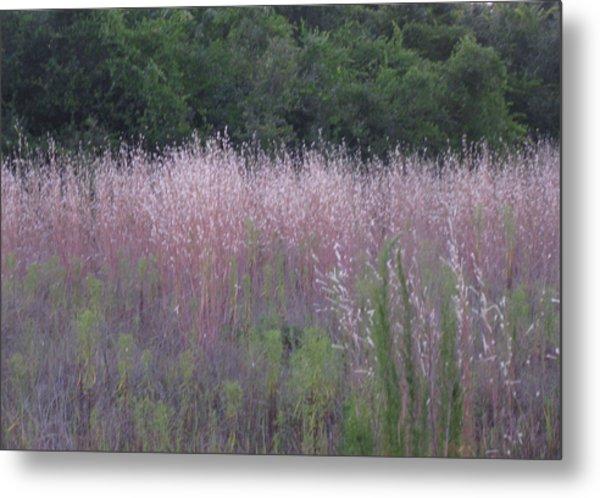 Purple Florida Grass Horizontal Metal Print
