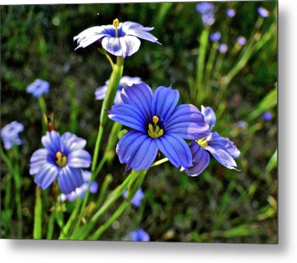 Purple Wildflowers Metal Print by Liz Vernand