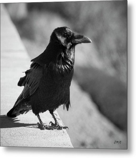 Raven Iv Bw Metal Print