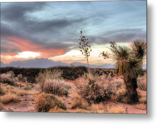 Reaching Skyward Metal Print by JC Findley
