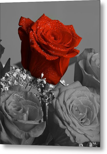 Really Red Rose Metal Print