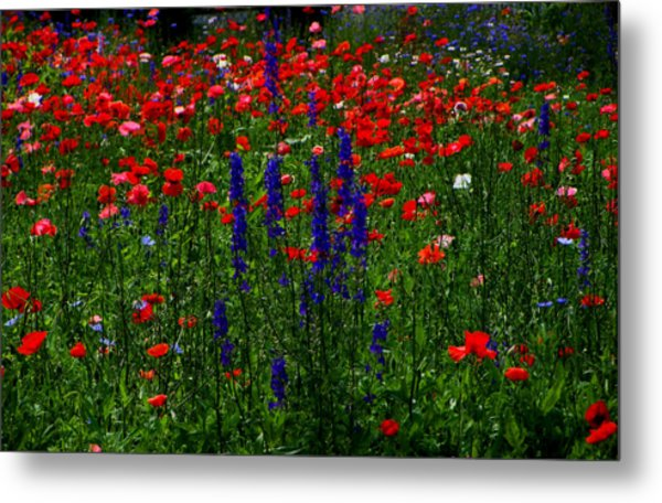Red And Blue Wildflowers And Poppies Metal Print by Martin Morehead