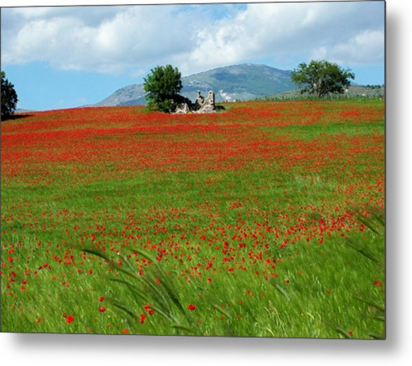 Red Fields Metal Print
