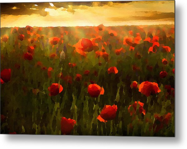 Red Poppies In The Sun Metal Print