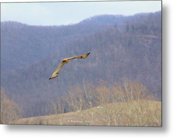 Red Tailed Hawk In Flight Metal Print by Carolyn Postelwait