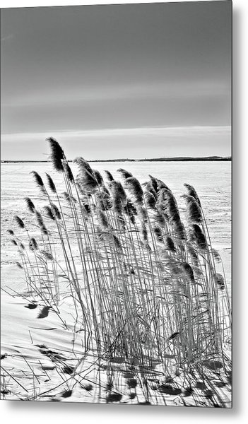 Reeds On A Frozen Lake Metal Print