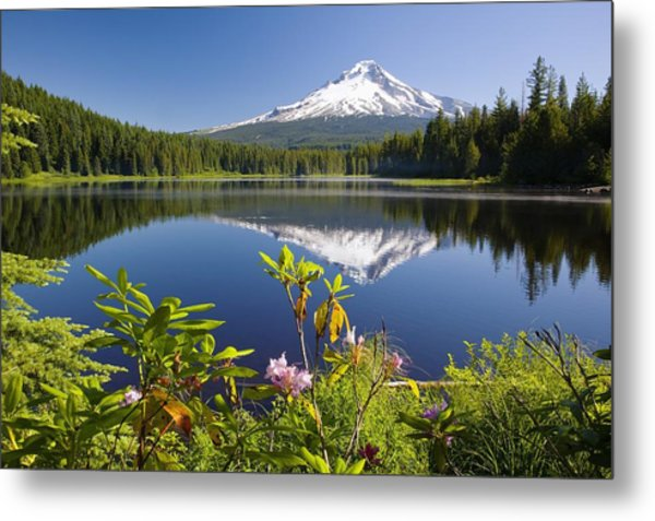 Reflection Of Mount Hood In Trillium Metal Print