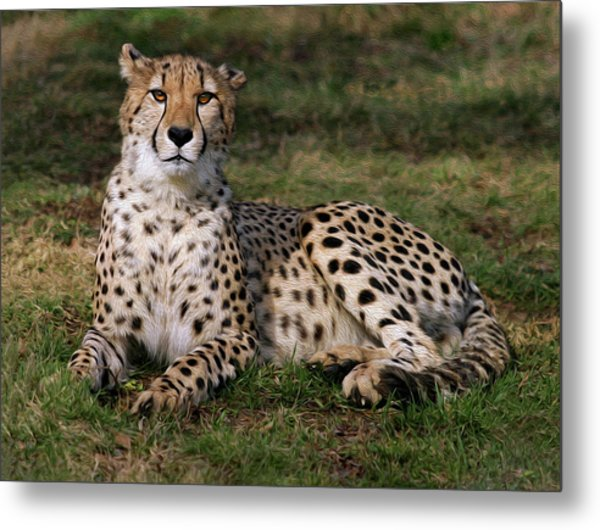Regal Pose Metal Print