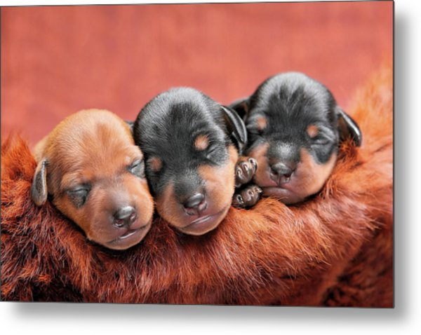 Resting In The Lord Metal Print