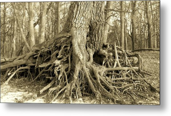 River Bank Oak Metal Print
