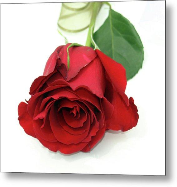 Roberts Single Red Rose Metal Print